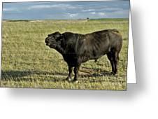 Hereford Bull Greeting Card by Mark Newman