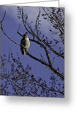 Here's Looking At You Greeting Card by Thomas Young