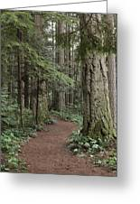 Heritage Forest Greeting Card by Randy Hall