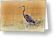 Heron At Sunset Greeting Card by Marty Koch