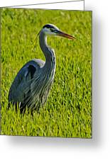 Heron In A Sea Of Green Greeting Card by Ben K