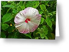 Hibiscus Greeting Card by Aimee L Maher Photography and Art