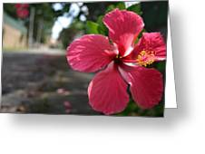 Hibiscus Greeting Card by Frederico Borges