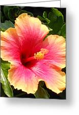 Hibiscus Greeting Card by Kay Gilley