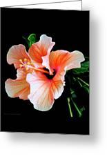 Hibiscus Spectacular Greeting Card by Ben and Raisa Gertsberg