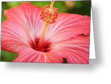 Hibiscus - Square Greeting Card by Carol Groenen