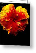 Hibiscus Greeting Card by Terry Johnson