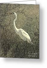 Hidden Egret Greeting Card by Carol Groenen
