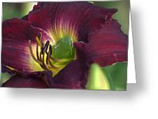 Hidden Treasures Greeting Card by Jodi Terracina