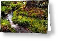 Hidden Woodland Corner. Benmore Botanical Garden. Scotland Greeting Card by Jenny Rainbow