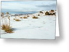 High Desert Snow Greeting Card by Betty Wiley