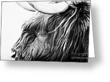 Highland Cow Mono Greeting Card by John Farnan