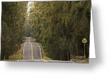 Highway 250 Greeting Card by Inge Riis McDonald