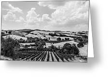 Hills Of Tuscany Greeting Card by Clint Brewer