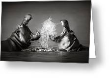 Hippo's Fighting Greeting Card by Johan Swanepoel