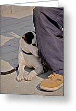 His Master's Foot Greeting Card by Odd Jeppesen