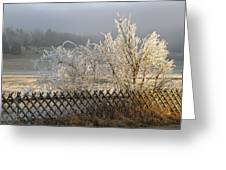 Hoarfrost in winter Greeting Card by Matthias Hauser