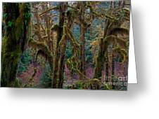 Hoh Rainforest, Olympic National Park Greeting Card by Mark Newman