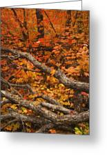 Holding Back Greeting Card by Peter Coskun