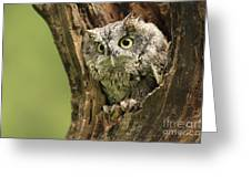 Hollow Screech- Eastern Screech Owl Greeting Card by Inspired Nature Photography Fine Art Photography