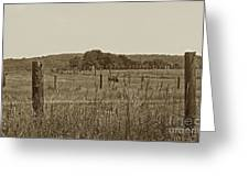 Home On The New Range Greeting Card by Skip Willits