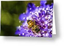 Honey Bee Greeting Card by Caitlyn  Grasso