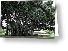 Honolulu Banyan Tree Greeting Card by Daniel Hagerman