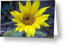 Hopeful Too Greeting Card by Chalet Roome-Rigdon