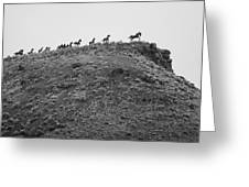 Horizon Horse Greeting Card by Paul Bartoszek