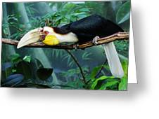 Hornbill Greeting Card by Paulette Thomas
