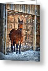 Horse And Snow Storm Greeting Card by Dan Friend