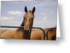 Horse Beauty Greeting Card by Charles Beeler
