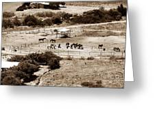 Horse Farm At Kourion Greeting Card by John Rizzuto