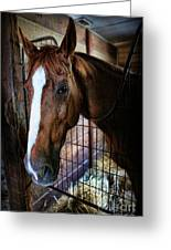 Horse In A Box Stall - Horse Stable Greeting Card by Lee Dos Santos