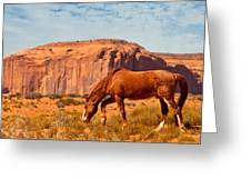 Horse In The Desert Greeting Card by Susan  Schmitz