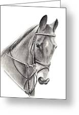Horse Greeting Card by Mary Mayes