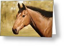Horse Portrait II Greeting Card by John Silver
