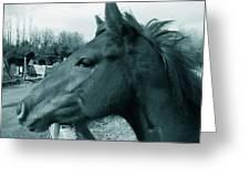Horse Sense Greeting Card by Steven Milner