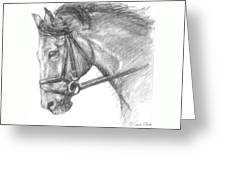 Horse's Head with Bridle Greeting Card by Sarah Parks