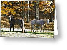 Horses In Autumn Pasture   Greeting Card by Susan Leggett