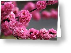 Hot Pink Blossom Greeting Card by Joy Watson