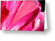 Hot Pink Greeting Card by Rona Black