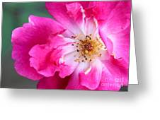 Hot Pink Rose Greeting Card by Sabrina L Ryan