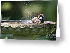 House Sparrow Washing Greeting Card by Tim Gainey