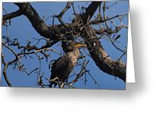 Houston Wildlife Double Crested Cormorant  Greeting Card by Joshua House