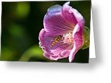 Hoverfly and Hollyhock Greeting Card by Gert Lavsen