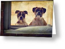 How Much Is That Doggie In The Window? Greeting Card by Stephanie McDowell