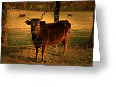 How Now Brown Cow Greeting Card by Nina Fosdick