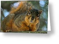 How's This Pose Greeting Card by Jay Nodianos