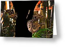 Huge Butterflies In Mindo Greeting Card by Al Bourassa